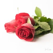 JuliePowell_Red Roses-7