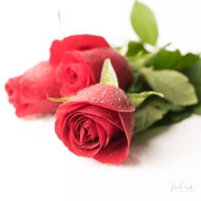JuliePowell_Red Roses-8