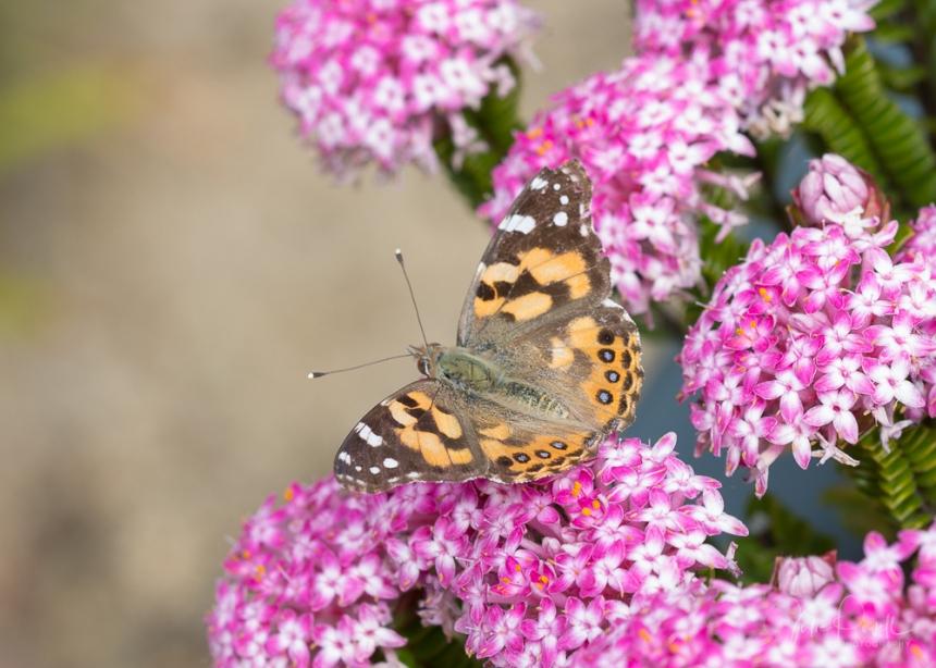 JuliePowell_Butterfly_LR-1