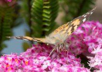 JuliePowell_Butterfly_LR-10