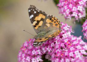 JuliePowell_Butterfly_LR-2