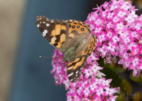 JuliePowell_Butterfly_LR-3