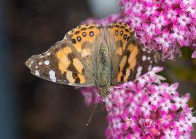 JuliePowell_Butterfly_LR-4