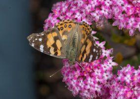 JuliePowell_Butterfly_LR-5