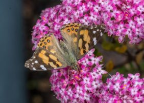 JuliePowell_Butterfly_LR-6
