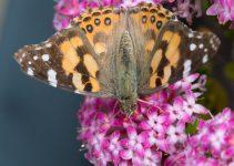 JuliePowell_Butterfly_LR-7