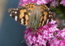 JuliePowell_Butterfly_LR-8