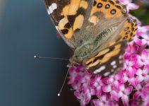 JuliePowell_Butterfly_LR-9