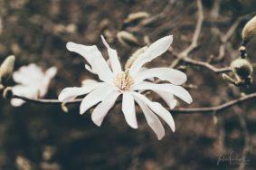 JuliePowell_Pirianda-21