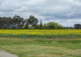 JuliePowell_Aust Gardens-127