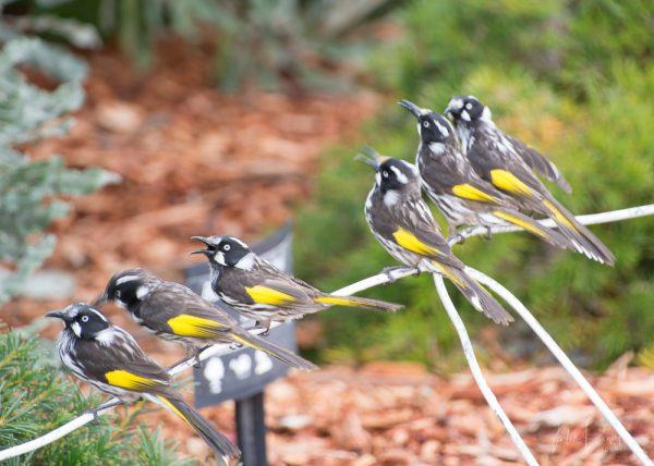 JuliePowell_Aust Gardens-31