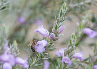 JuliePowell_Aust Gardens-57