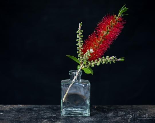 JuliePowell_Bottle Brush-05741