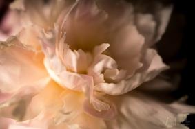 Julie Powell_Peonies Dark-7