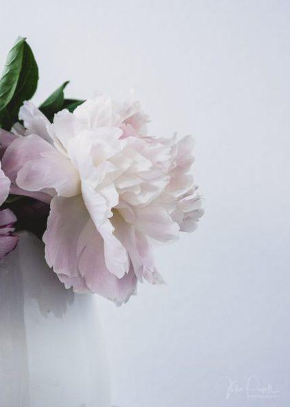 Julie Powell_Peony-6