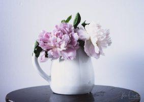 Julie Powell_Peony-7