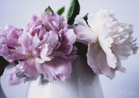 Julie Powell_Peony-8