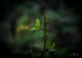 Julie Powell_Rain Forest-13