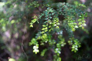 Julie Powell_Rain Forest-14