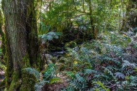 Julie Powell_Rain Forest-3