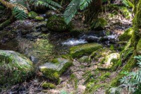 Julie Powell_Rain Forest-4