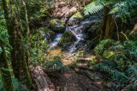 Julie Powell_Rain Forest-7