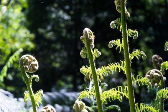 Julie Powell_Rain Forest