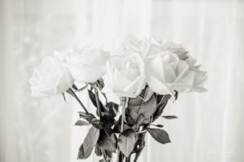 Julie Powell_Roses-2