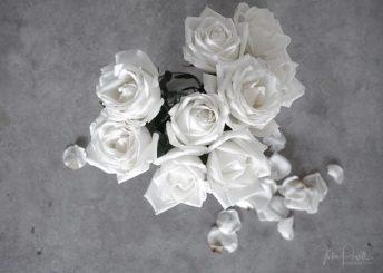 Julie Powell_Roses-4