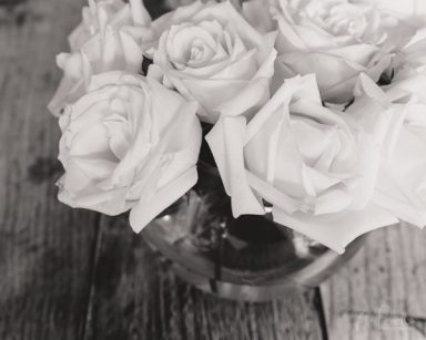 Julie Powell_Roses-8