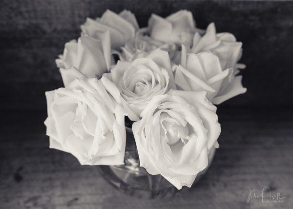 Julie Powell_Roses-9