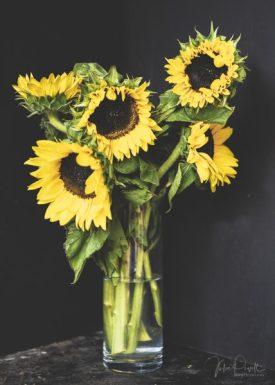 Julie Powell_Sunflowers-17