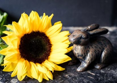 Julie Powell_Sunflowers-24