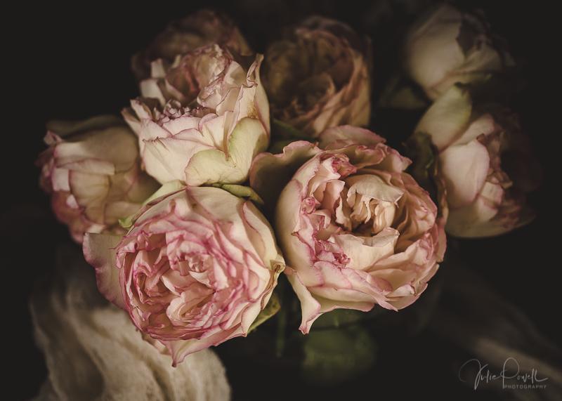 Julie Powell_Peony-5