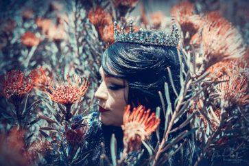 Julie Powell_Warratah Princess-3