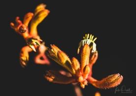 juliepowell_aust gardens-15