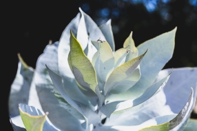 juliepowell_aust gardens-19