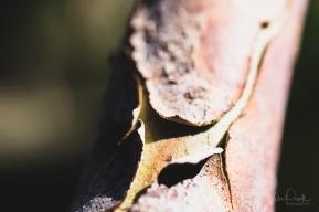 juliepowell_aust gardens-40