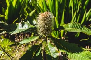 juliepowell_aust gardens-54