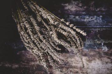 juliepowell_lavender-2
