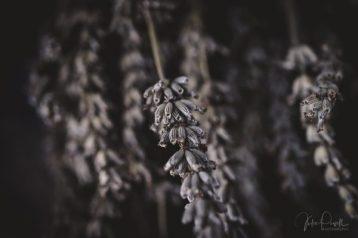 juliepowell_lavender-4