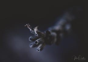 juliepowell_lavender-6