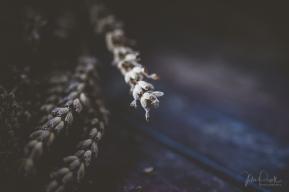 juliepowell_lavender-7