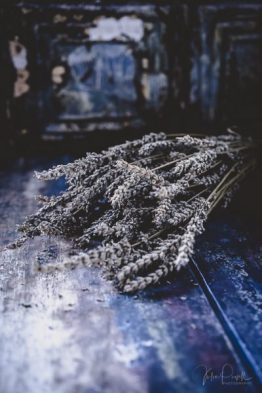 juliepowell_lavender-9