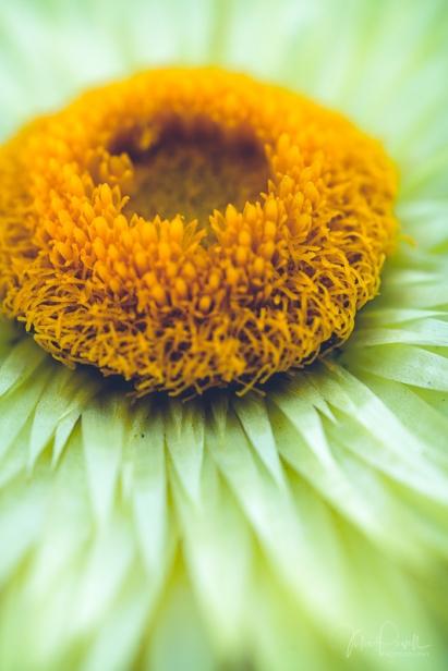 juliepowell_paper daisies-10