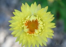juliepowell_paper daisies-15