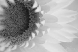 juliepowell_paper daisies-16