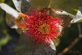 JuliePowell_Aust Gardens-10