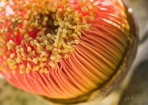 JuliePowell_Aust Gardens-12