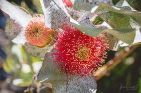 JuliePowell_Aust Gardens-16
